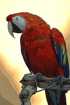 Parrot Watching by Norman  Andrus