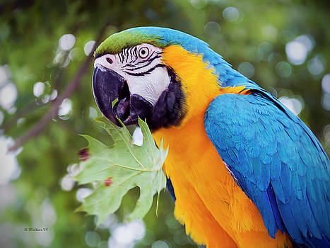 Parrot With Leaf by Brian Wallace