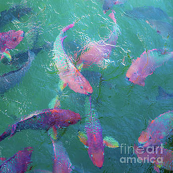Parrotfish of the Keys by Beth Riser