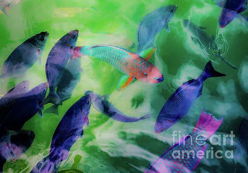 Parrotfish of the Keys 2 by Beth Riser