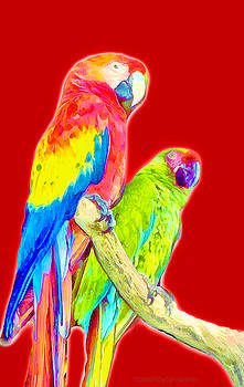 Parrots 2 by Mary Sylvia Hines