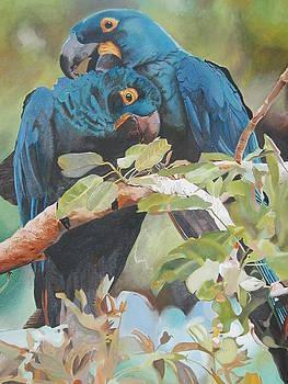 Parrots in Love by Bennie Parker
