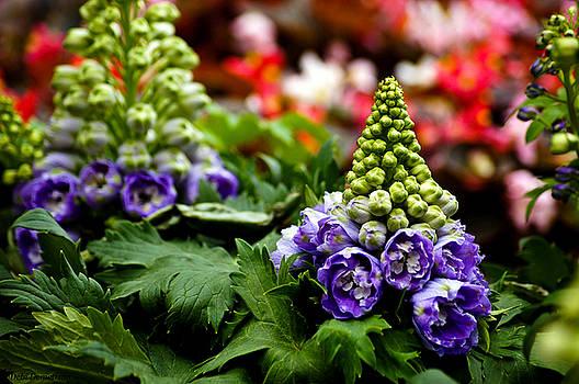 Partial Bloom by Debi Demetrion