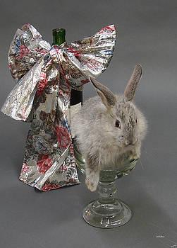 Alana  Schmitt - Party Animal