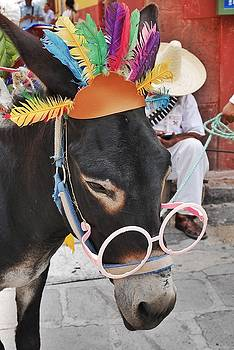 Party Burro in Mexico by Steffani Cameron