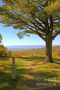 Pass Mountain Loop Trail Skyline Drive Shenandoah National Park by Louise Heusinkveld