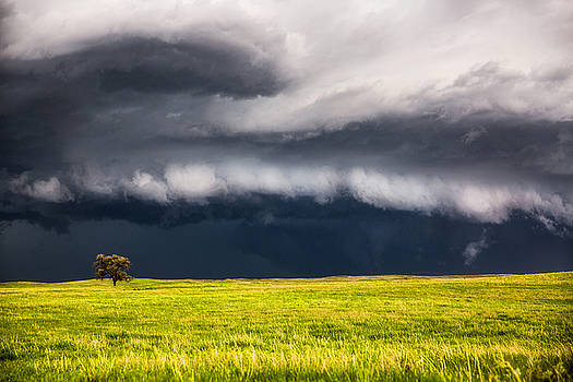Passing By - Storm Passes By Lone Tree in Western Nebraska by Sean Ramsey