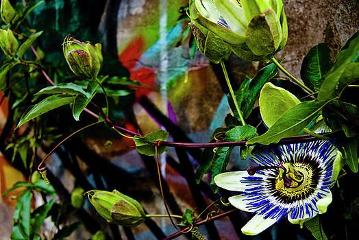 Passion Flower Graffiti by Grebo Gray