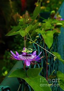 Passion Flower Portrait by Craig Wood