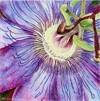 Passion Flower by Robynne Hardison