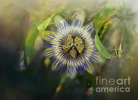 Passion Flower by Victoria Harrington