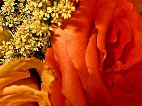 Passion for Autumn by Elizabeth Tillar