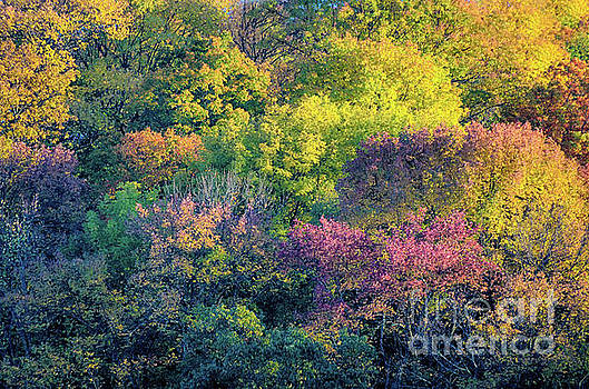 Pastel colors of fall Radnor Lake Nashville TN by Photo Captures by Jeffery