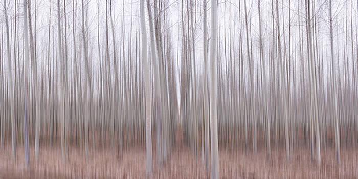 Pastel Grove by Brad Scott