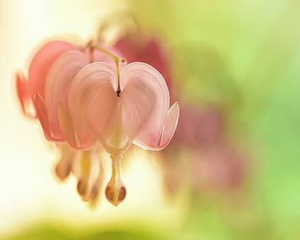 Pastel Heart by Oscar Gutierrez