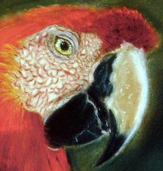 Pastel of Red on the Head  by Antonia Citrino