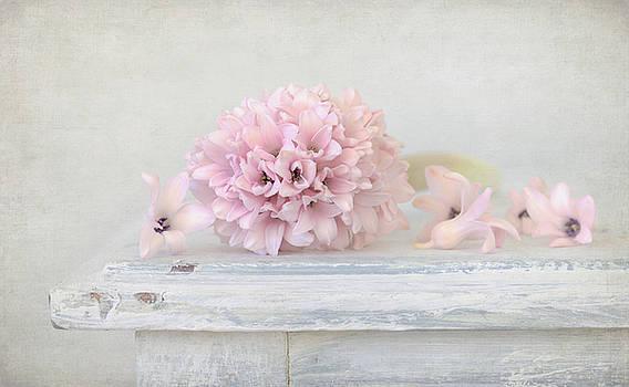 Kim Hojnacki - Pastel Pink Hyacinth