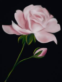 Pastel Pink Rose by Michele Koutris