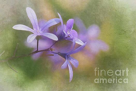 Pastel Shades of Purple by Nikki Vig