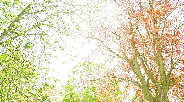 Pastel Tree by Joshua Ackerman
