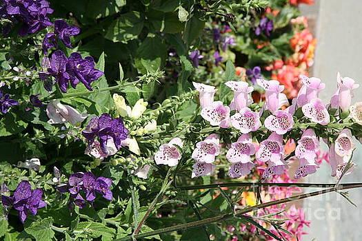Chuck Kuhn - Pastels Flowers