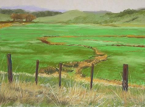 Pasture Along Waingaro Road New Zealand by Mary McInnis