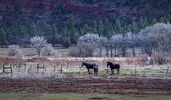 Pasture Mates by Julie Basile