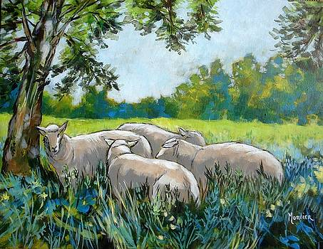 Cathy MONNIER - Pasture with sheeps