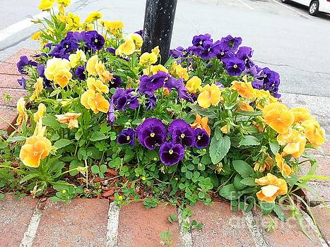 Patch of Pretty Pansies Planted Around a Pole.. by SimbiAni