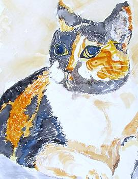 Patches by Barbara Pearston