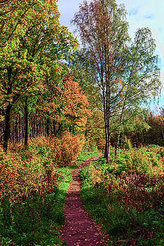 path in a beautiful country Park on a Sunny autumn day by George Westermak