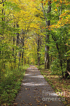 Jill Lang - Path in the Woods During Fall Leaf Season