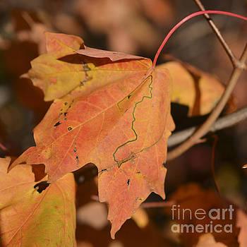 Path through a leaf by Alana Boltwood