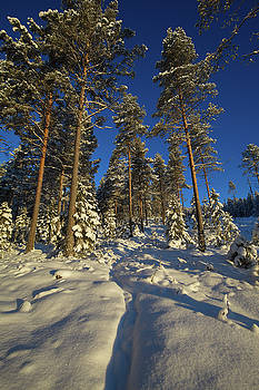 Path through a snowy forest by Ulrich Kunst And Bettina Scheidulin