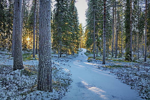 Path through a snowy winter forest by Ulrich Kunst And Bettina Scheidulin