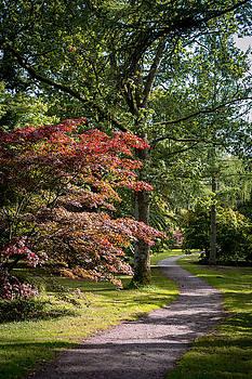 Path through autumn forest by Scott Lyons