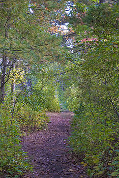 Path Through Autumn Woods by Michael Wall