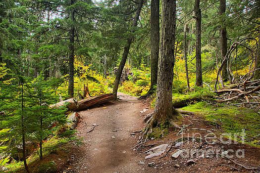 Adam Jewell - Path Through The Mt. Rianier Forest