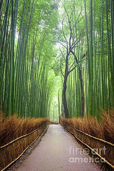 Path to bamboo forest, Arashiyama, Kyoto, Japan by Noppakun Wiropart