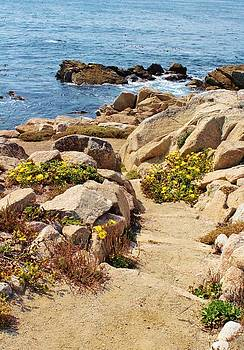 Path to Beach by Julie Lourenco