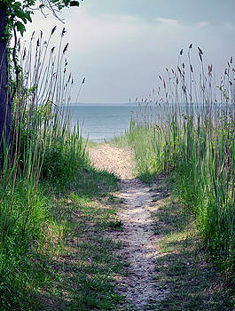 Path To Beach Pano by Brian Wallace
