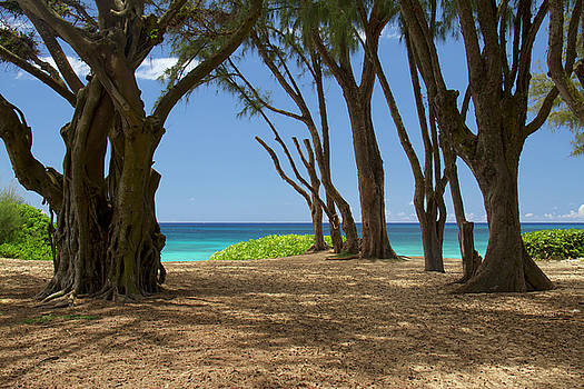 Path to Bonzai Pipeline by Debby Richards