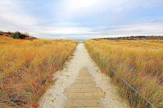 Path to the beach by Brian Pflanz