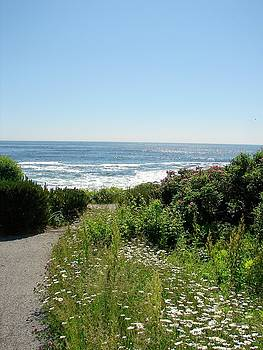 Path to The Marginal Way by Belinda Dodd
