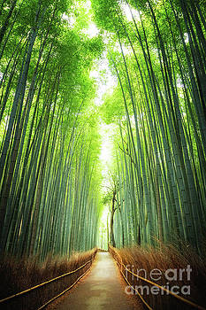 Pathway through the bamboo grove Kyoto by Jane Rix