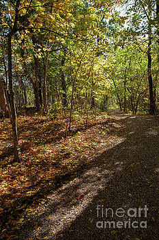 Pathways in Fall by Iris Greenwell