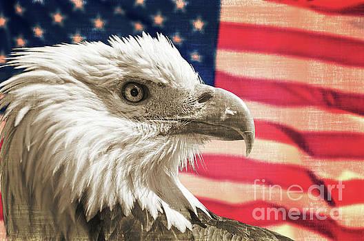 Delphimages Photo Creations - Patriot