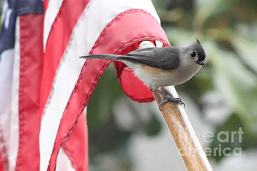Patriotic Titmouse by Sallie Anderson