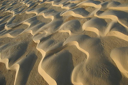 Sami Sarkis - Pattern in desert sand