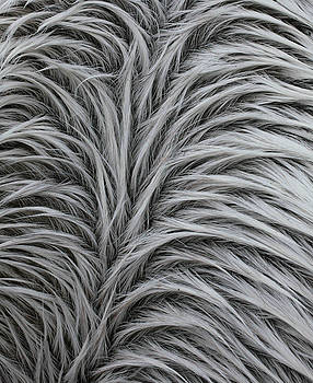 Pattern in Gray 2 by Matt Cormons